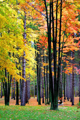 Bright Colorful Trees