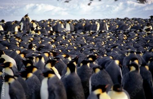 Staande foto Pinguin Tortue d'empereurs