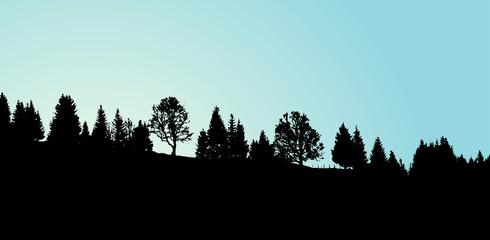 Lever du jour sur la forêt