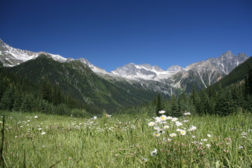 Rogers Pass - focus on flowers