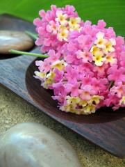 Aromatherapy Lantana