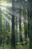 Sun rays shine through branches poster
