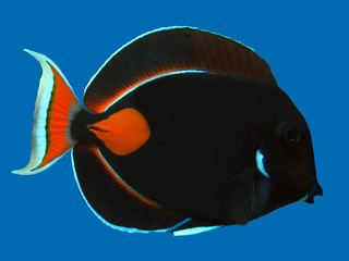 Achilles Tang on Blue