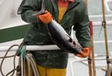 marin pêcheur4 poster