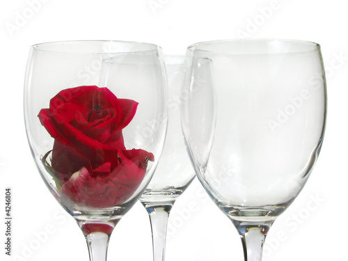 Wineglass with rose flower on white background