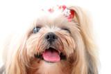 Pet Portrait poster