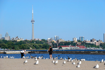 Feeding the seagulls on a Toronto beach