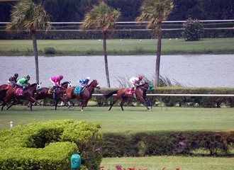 Horses Racing on Turf