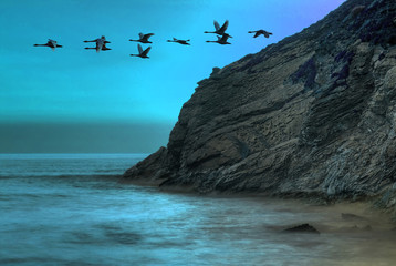 Ducks flying over the ocean