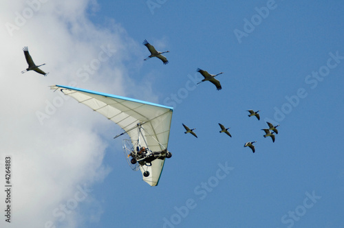 Leinwandbild Motiv Flying with birds