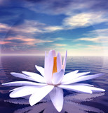White lotus flower reflected on tranquil waters poster
