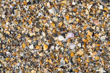 Seashells background