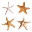 Leinwanddruck Bild - Starfish