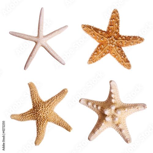 Leinwanddruck Bild Starfish