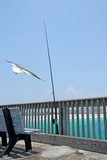 Fishing Pole on Pier with Seagull Overhead poster