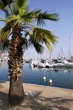 port de Fréjus avec un palmier poster