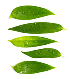 Set of rich green leaves poster
