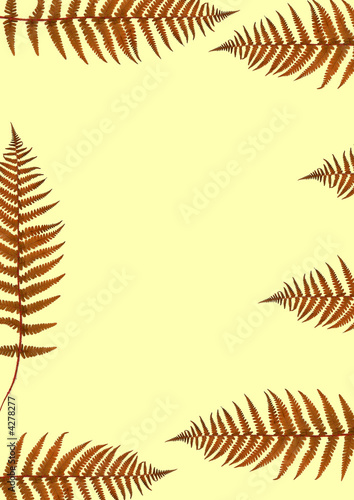 Ferns of Autumn