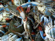 Pile of Fresh Crab for sale in Fish Market