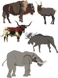 strong animals collection poster