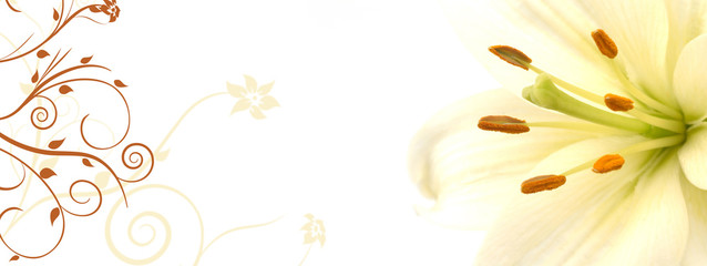 lily banner