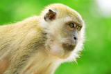 Monkey stares off with intense look in jungle poster