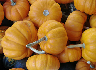 Miniture Pumpkins For Sale