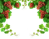 Grapevine border with clusters, leaves and sprouts, isolated poster