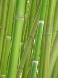 bamboo grove. poster