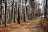 collar-work in forest of European beech poster