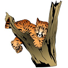 Leopard Puppy on branch