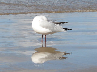 a seagull standing on the wet sand