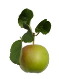 Green shiny delicious apple  poster