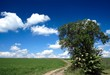 horizon , green field, path, tree,blue sky and white clouds