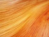 Fototapety nervures gaine de palmier