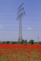 Poppy field and electricity