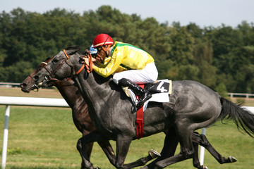 course de chevaux - horse racing