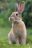 Fototapety Rabbit