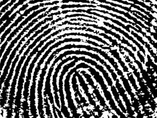 Fingerprint Crop - close up