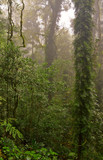 dorrigo world heritage rainforest on a foggy day poster
