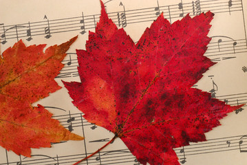 Leaves on Music Background