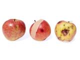 apple - good bad ugly poster