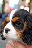 Pet Dog Closeup poster