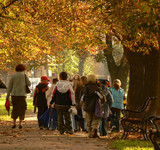 School kids on a trip in the park in autumn poster