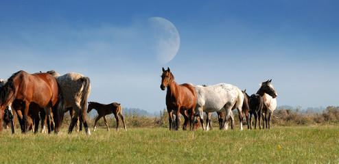 troupeau de chevaux dans une prairie