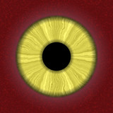 Closeup of human eye with yellow iris poster