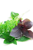 Assorted basil herbs poster