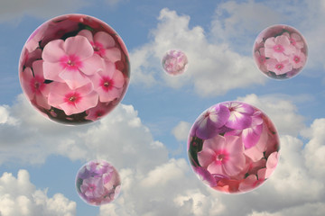 Some flower spheres on a background of the cloudy sky.