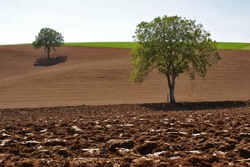deux arbres
