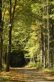 Autumnal ground road leading into forest poster
